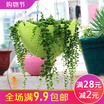 Hanging plastic hanging basket flowerpot hanging orchid basin hanging wall-mounted green Dorothy Multi-meat flower balcony thickened resin flowerpot