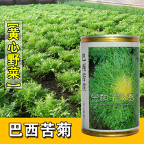 Brazilian Bitter Chrysanthemum seed nutrition health underburnt bitter chrysanthemum vegetable seeds special vegetable seed base planting