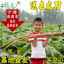 Fresh Burdock 5 Jin Xuzhou 2018 now dig cattle arm root cangshan health Vegetable raw gold burdock beef Side Tea