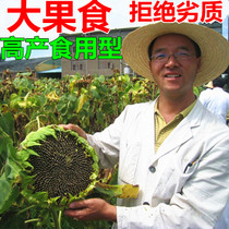 Sunflower seeds with high yield and seeds of sunflower seed in four Seasons