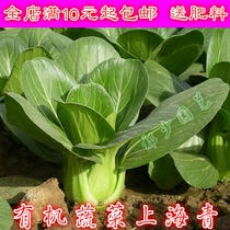 Shanghai green seeds Green terrier vegetable chicken feather vegetables delicious small vegetables seeds balcony garden Four Seasons sowing vegetable seeds