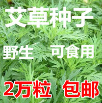 Wormwood seeds Four Seasons edible artemisia seeds wild herbs medicinal wormwood Seeds qi ai moxa seeds