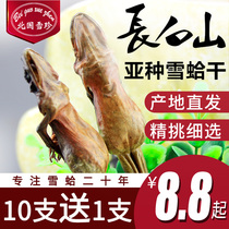Beiguo Xuezhen snow clam dry whole northeast Changbai mountain clam dry forest frog oil snow clam oil 10g