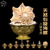 Selection of eight for the use of natural small conch Buddhism auspicious table imported biological L-White snail