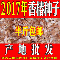 Origin direct sales 2017 new red oil Toona sinensis seed Toona sinensis sprout seedling seed Red Chun Shu Xia sprout tree