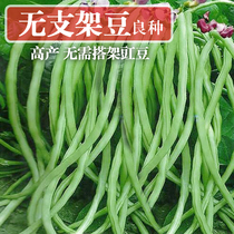 Cowpea seed no shelf short red long beans seed spring no rattan beans alone does not take the frame climbing bracket vegetables