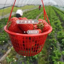 Panier Jetable En Plastique Rond panier de Baie panier de fraise panier de cerise de raisin panier de cueillette panier de fruits verger