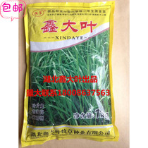 High yield of rye grass seed in xin-da-ye and its cutting times are suitable for silage seed Factory Direct Sale